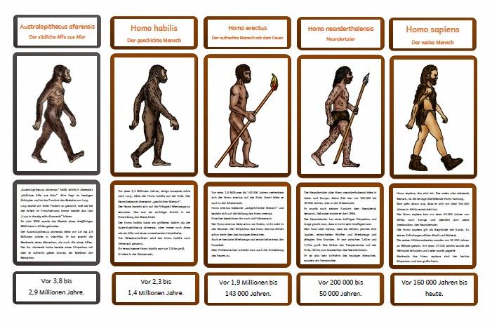 evolution des menschen zusammenfassung