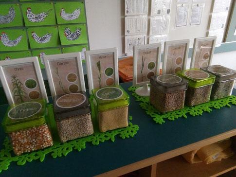 getreidepflanzen aufbau grundschule