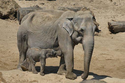 Basteln Von Zootieren Elefant Grundschule Und Basteln Der Blog
