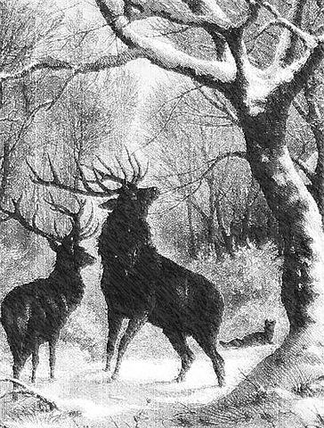 Tiere Im Winter Lesen 1 Grundschule Und Basteln Der Blog Von